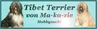 Tibet Terrier von Ma-ka-zie