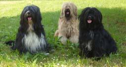 Ghan-go, Jalie und Bensa