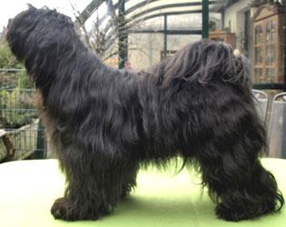 Wanted Nice Dog's Bluey Lamleh