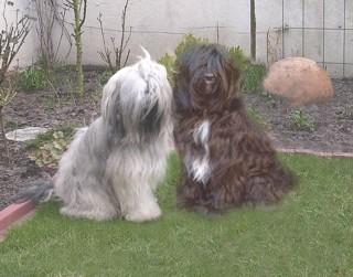 Geoffrey und Bensa