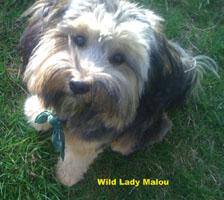 Wild Lady Malou