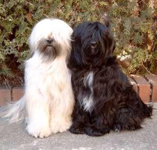 Saidy und Bensa