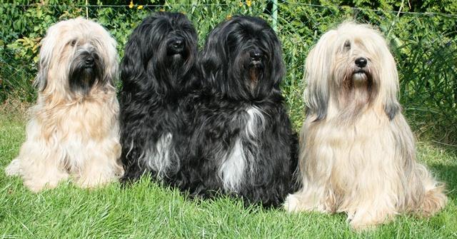 Unsere Hunde im Sommer 2014