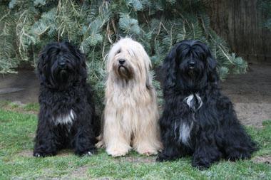 Unsere Hunde im Januar 2012