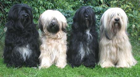 Unsere Hunde im Sommer 2013
