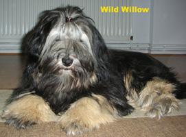 Wild Willow