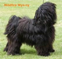 Wildfire Wyn-ny