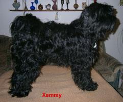 Xammy