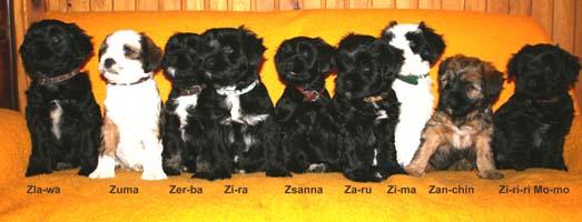 Z-Wurf mit 8 Wochen
